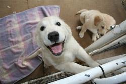 puppysatgate